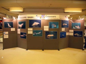 Section 5 - Activities - 3. Dolphin Exhibition-1