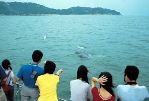 Section 5 - Activities - 4.Wild Dolphin Encounter