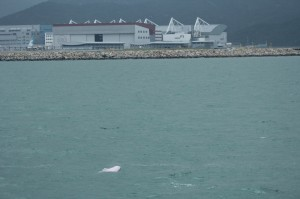 Dolphin & airport